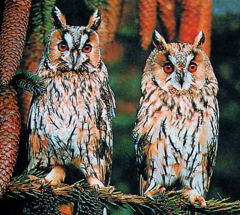 птицы средней полосы России.
